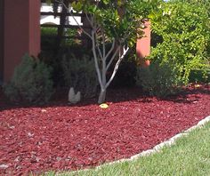 Difference between Compost and Mulch ~ Gardening ABC