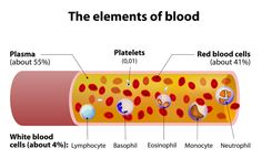 Body, the most essential fluid inside a living body comprimises of four components Red Blood Cells, White Blood Cells, Platelets and Plasma. Based on Antigens present, human blood is classified into 8 different groups. Function Of Blood, Blood Components, Blood Test Results, Blood Plasma, Health Literacy, Blood Groups, Body Fluid, White Blood Cells, Phlebotomy