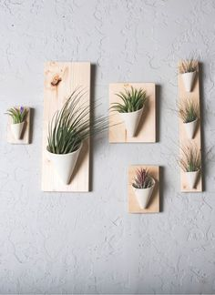 These indoor ceramic hanging wall planters have a wood backing for easy installation. Air plant included. Pictured in ivory. Available in various colors and sizes. #carterandrose #portland #verticalgarden