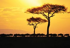 Limpopo Province, South Africa #simplybeautiful