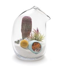 Lítill Terrariums they are too cute!