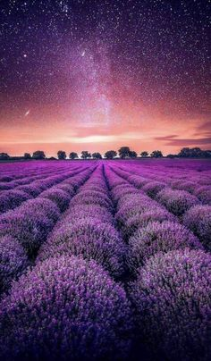 Amazingly Beautiful - Nature and travel photography — Lavender Fields under the stars, in Valensole. Field Wallpaper, Purple Wallpaper, Nature Wallpaper, Landscape Wallpaper, Beautiful Landscapes, Beautiful Images, Beautiful Flowers, Beautiful Scenery, Lavender Fields