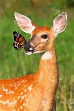 Omigods a butterfly landed on ma nose!!!