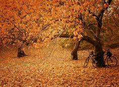 Autumn - Central Park, New York City.