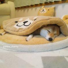 しまドラでぬくぬく~(*´∀`*) #大寒波が来てますね #雪降るかなぁ #しまドラ #おやすみなさい #goodnight