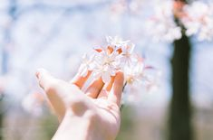 Những bức tranh em vẽ đã trôi màu | GÓC CẢM XÚC  Những bức tranh em vẽ đã trôi màu    Ô cửa nhỏ cuối đường nay đã khép    Bông hoa trắng chỉ là hồi ức đẹp    Chúng ta vì sao vẫn dai dẳng nỗi buồn?