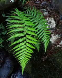 So much nature in one day #tripletfalls #littleairefalls #hopetounfalls #youyangs #lara #lorne #apollobay #waterfalls #daytreks #naturewalks #beautifulday #rainforest #hikes #melbourne #victoria #australia #adventures #greatoceanroad #otways by demijadebowyer