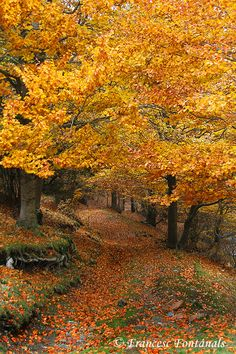 Path in the woods (The Fageda in Jordà, Spain) by Francesc Fontanals on 50 . - Cassie 🌾🌼 - - Path in the woods (The Fageda in Jordà, Spain) by Francesc Fontanals on 50 . Fall Pictures, Nature Pictures, Beautiful World, Beautiful Places, Beautiful Pictures, Autumn Scenes, Autumn Aesthetic, All Nature, Nature Scenes
