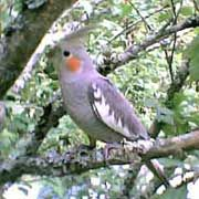 Safe and Toxic Plants for Pet Birds List,