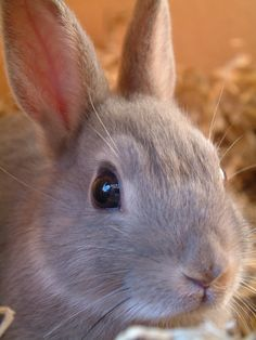 About rabbit hutches