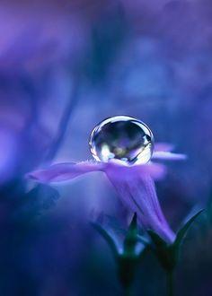 dew drop on a .5 cm  flower