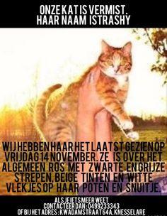 Mijn katje is #vermist  Kwadamstraat te #Knesselare 14/11 Trashy ik ben echt ongerust.. Mocht er iemand mij kunnen helpen haar terug te vinden zou ik u eeuwig dankbaar zijn. Ik mis haar enorm!! Nathalie Exitdrieentwintig https://www.facebook.com/nathalie.exitdrieentwintig?fref=photo