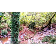 nature,paradise,silence