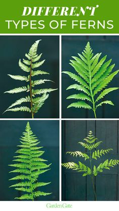 Ferns are a shade garden staple with many different shapes and textures to try - check out 10 hardy ferns we reccomend #FernGarden #ShadeGarden #EasyPlants #GardenIdeas #GardenGateMagazine Ferns Garden, Lawn And Garden, Garden Tips, Shade Garden, Garden Ideas, Raised Bed, Raised Garden Beds, Christmas Fern, Types Of Ferns