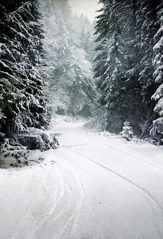Christmas Tree Winter Snow Road Photo Backdrop LV-873
