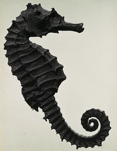 I have a Man Ray book.  he did lots of gender crossing.    Black Sea Horse- Man Ray, 1930.