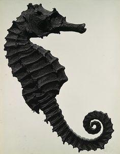 tout ceci est magnifique: November 2011 - Man Ray 1930 - black and white photo -