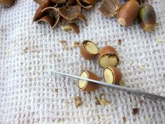 Gourmet Foraging and Advanced Acorn Processing and a link to a recipe for gourmet umami acorn burgers