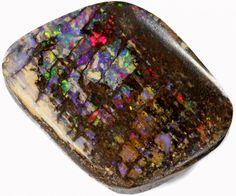 9.6 CTS BOULDER WOOD FOSSIL-WINTON [SO7679]  wood fossil opal , vegetation opal , boulder opal , solid opal , opalized opal