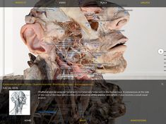 Augmented Reality, Virtual Reality, Human Anatomy, Lab, Apps, Medical, Study, Google, Studio
