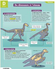 Du dinosaure à l'oiseau Plus
