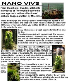 Nano viv - Orchid Forum by The Orchid Source