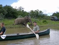 Free time may see you out canoeing - yet another opportunity to get up close and personal to some of Amakhalas amazing array of wildlife Big 5, Canoeing, Free Time, South Africa, Opportunity, Wildlife, Elephant, World, Amazing