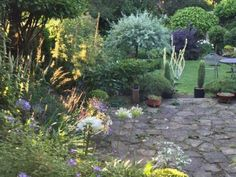 late august 2015 whilst the evening sun highlights the grasses the verbascum on the right still
