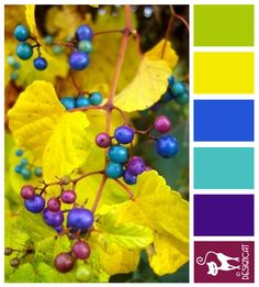 porcelain berry Ampelopsis - Plum, Purple, Tiffany Blue, Yellow, Green - Designcat Colour Inspiration Board