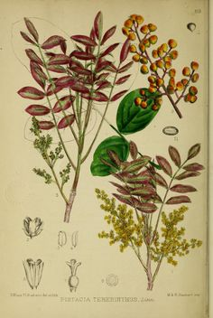 1 - Medicinal plants. - Biodiversity Heritage Library