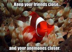 lesson for Nemo