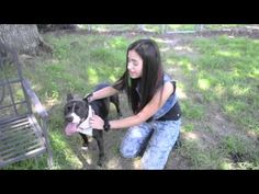 Alanis Sophia Pasco County Animal Service Adoption Campaign
