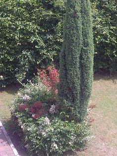 Twitter / @artroomsgstezim Bed And Breakfast, Twitter, Plants, Breakfast In Bed, Plant, Planting, Planets