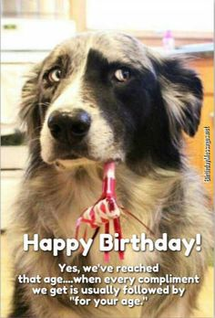 Funny Birthday Wishes: Uniquely Funny Messages Birthdays happy birthday messages Birthday Wishes For Girlfriend, Birthday Poems, Birthday Wishes Messages, Birthday Wishes For Friend, Happy Birthday Name, Birthday Wishes Funny, Birthday Greeting Cards, Birthday Greetings, Funny Dog Videos