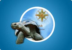 Animals, Adaptation, and the Galápagos Islands: A Science Explorations Activity