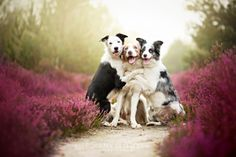 Photographie polonaise prend le plus de superbes photos de chiens Ever
