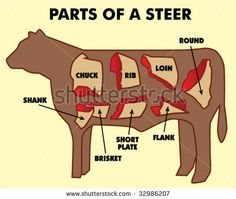 4-H __Parts of a Steer ○ Large Project | Always refer to your 4-H book or a trusted reference.when learning about your project ||