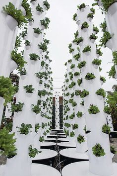 Montecito ~ Urban Farm Tower Gardens