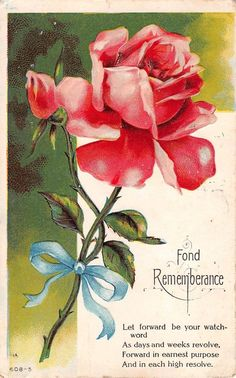 Beautiful Pink Roses for Fond Rememberance-1909 Postcard-No. 608-5