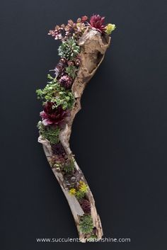 Learn how you can make your own stunning driftwood planter filled with succulents