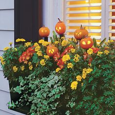 Petite Halloween Pumpkins very cute for garden stakes. I think I'd drill holes instead of carving and put those little 20 light battery operated lights in them to light the path to the house