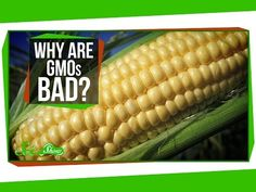 Why are GMOs Bad? - YouTube