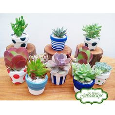 Succulents from the Philippines