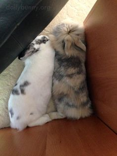 Bunnies relax together in a quiet corner - May 8, 2017