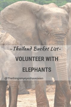 Thailand Bucket List; Volunteer With Elephants. The Things My Eyes Have Seen