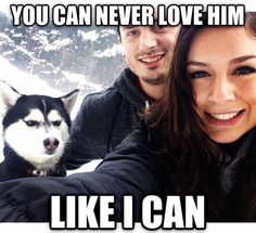 16 Best Siberian Husky Memes of All Time - Dog Red Line Humor Animal, Animal Memes, Funny Animals, Animals Dog, Funny Cute, The Funny, Funny Man, Super Funny, Doug Funnie