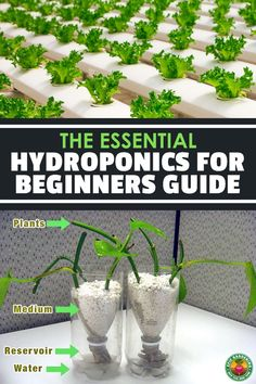 Learn the science behind hydroponics and how to build your own homemade hydroponic systems with household materials! Homemade Hydroponic System, Home Hydroponics, Hydroponic Grow Systems, Hydroponic Farming, Aquaponics Greenhouse, Hydroponic Growing, Aquaponics Diy, Hydroponics System, Hydroponic Gardening