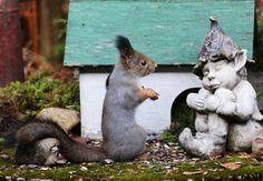Kurre-Orava ja peikko