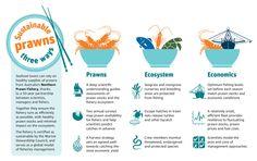 bryony-bennett-prawn-infographic.jpg (590×372)
