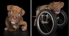 Disabled Puppy Abandoned In Dumpster Finally Gets His Wheels | Bored Panda